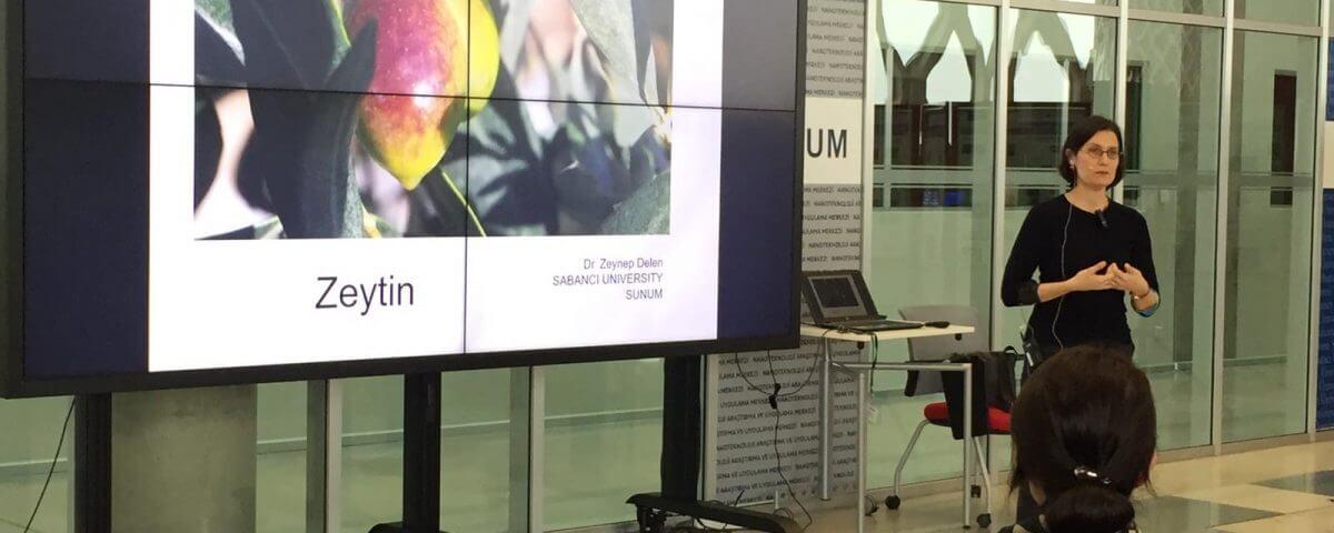 Nano Open : Kültürel ve Ekonomik Açıdan Zeytin, (Gözümüzden Kaçanlar)– Dr. Zeynep Delen Nircan